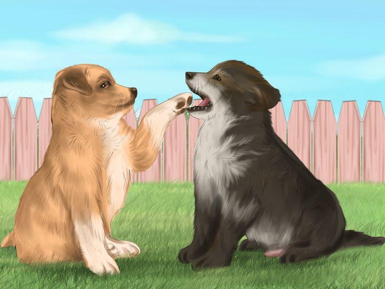 Care Dogs