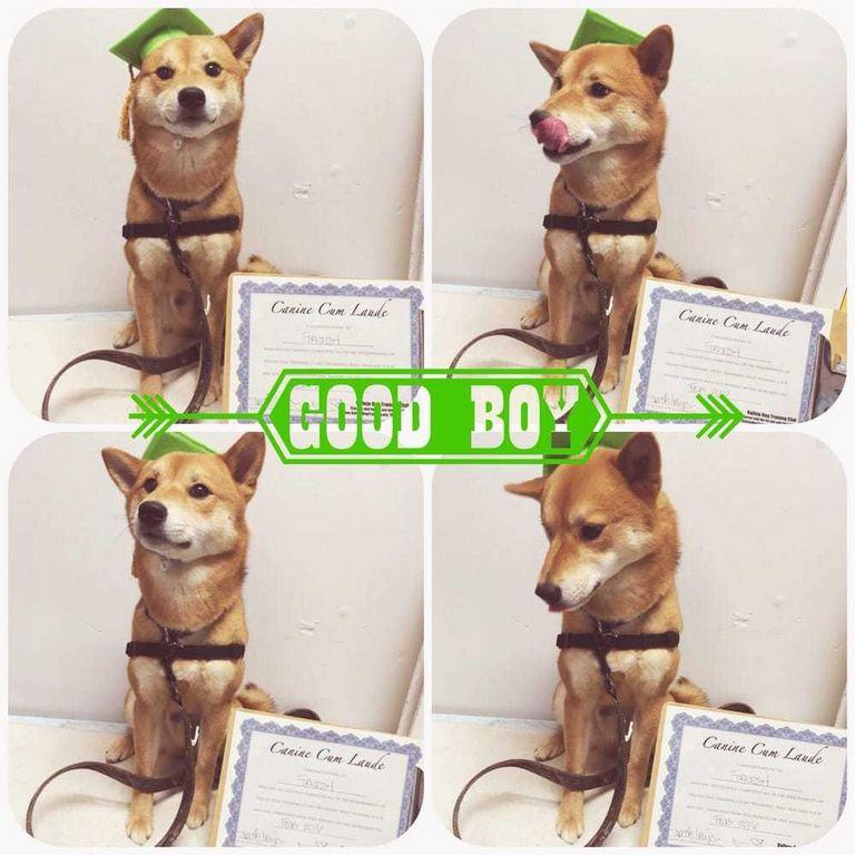 Carolina Dog Training Club