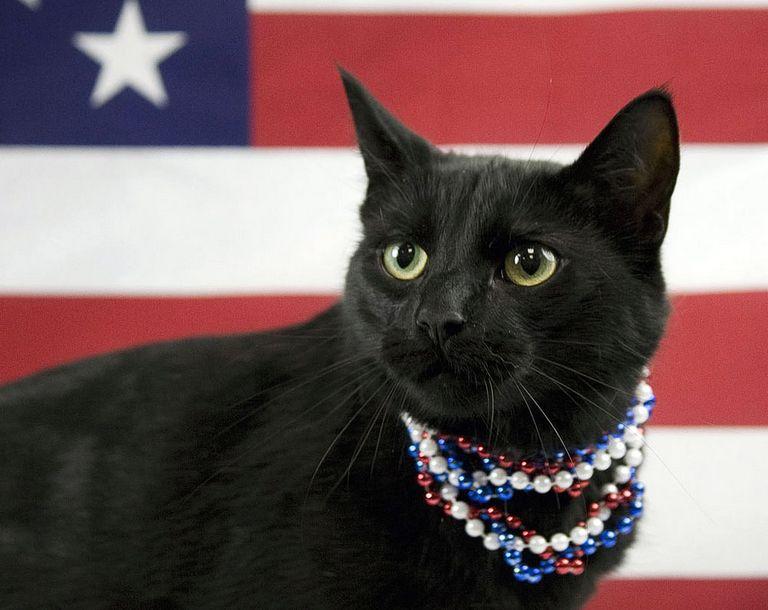 Cat Rescue Louisville Ky