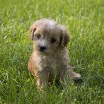 Craigslist Deep East Texas Pets   Top Dog Information