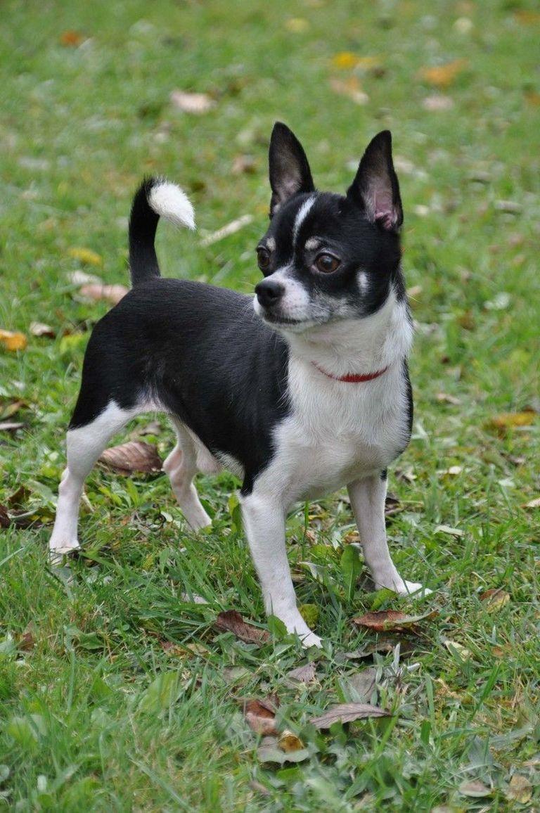 Charlotte Vt Dog Rescue