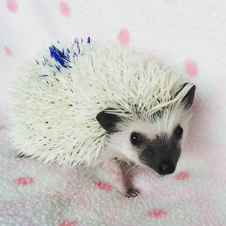 Cheap Hedgehogs For Sale In Ct