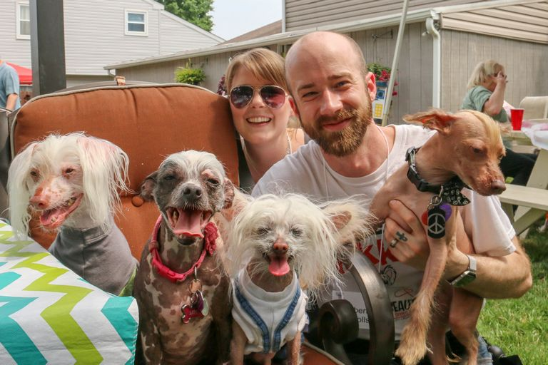 Chinese Crested Puppies For Sale In Tennessee