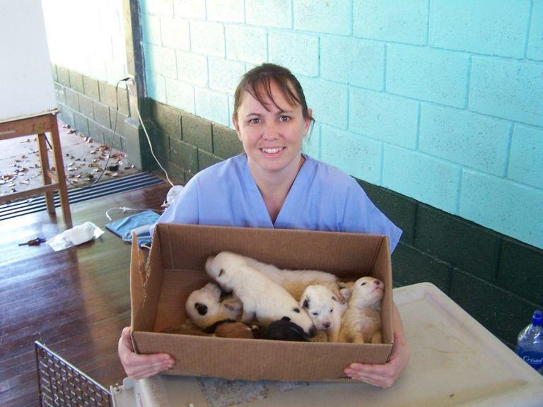Clinton Parkway Animal Hospital