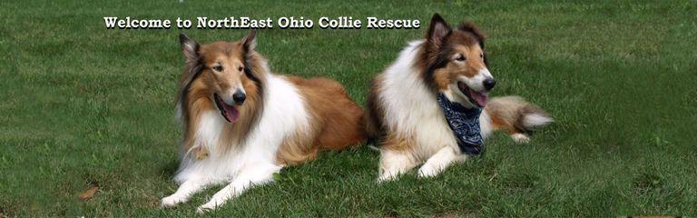 Collie Rescue Ohio