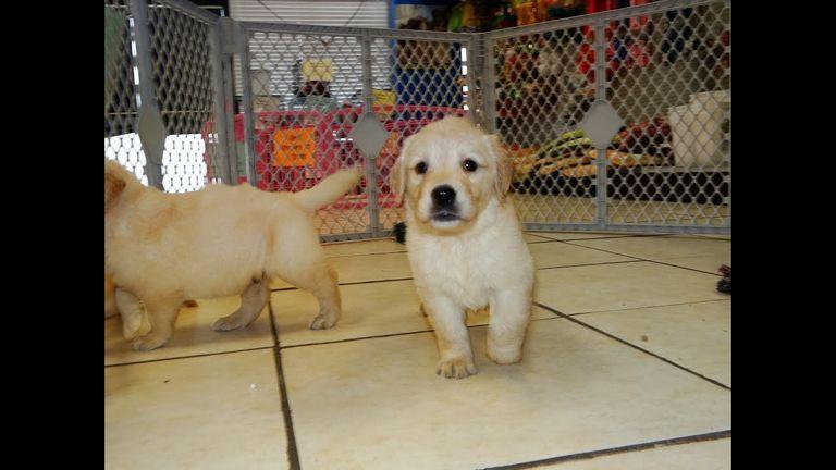Craigslist Jacksonville Nc Pets