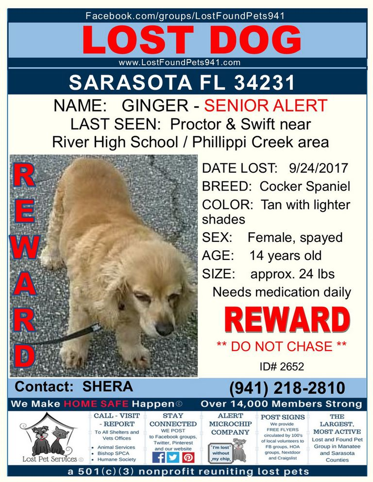 Craigslist Lost And Found Pets Florida | Top Dog Information