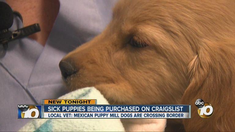 Craigslist San Diego Pets