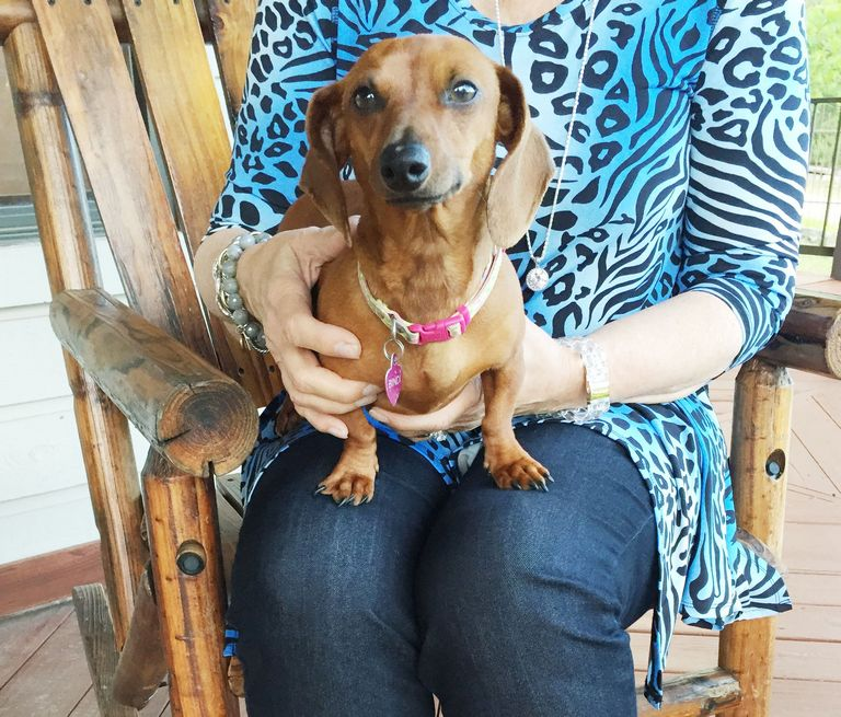 Dachshund Puppies For Sale In New Braunfels
