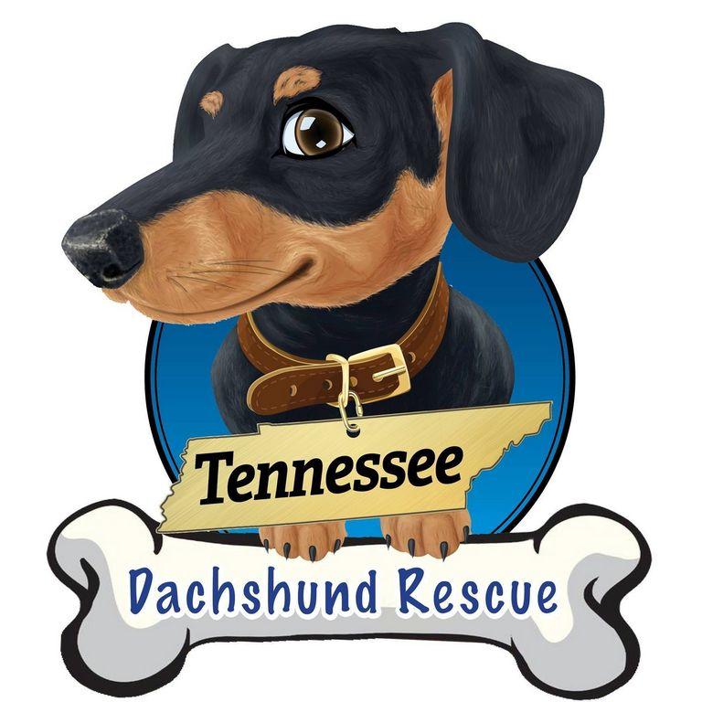 Dachshund Rescue Cookeville Tn