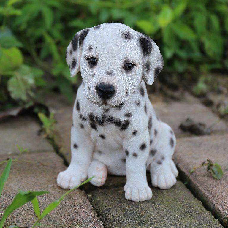 Dalmatian Pitbull Puppies For Sale