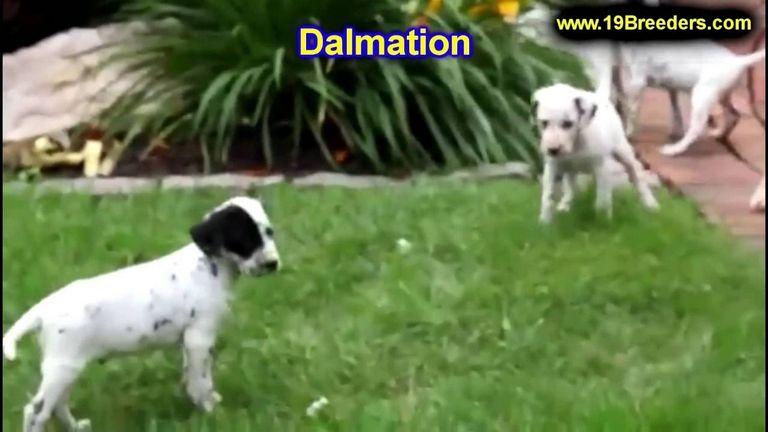 Dalmatian Rescue Kansas