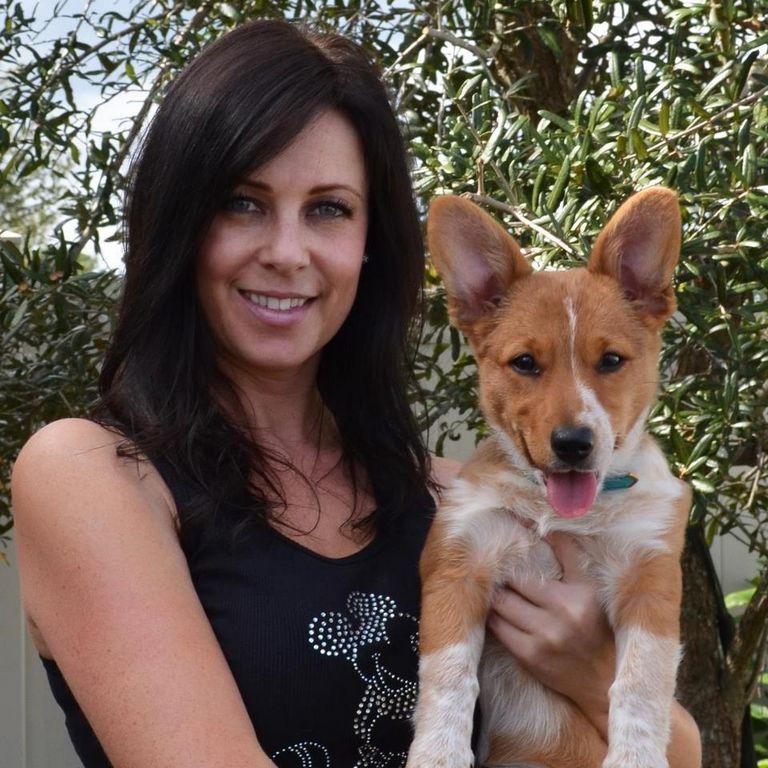 Daytona Beach German Shepherd Rescue Facebook