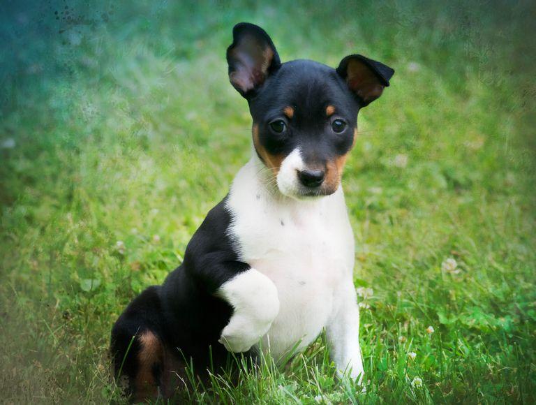 Decker Terrier Rescue