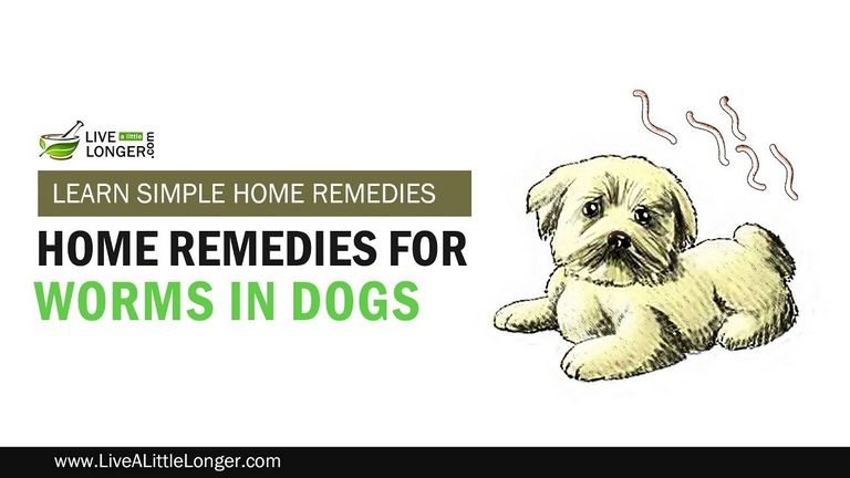 Deworming Puppies At Home