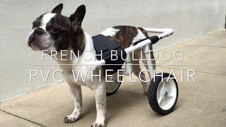 Diy Dog Wheelchair For Dachshund