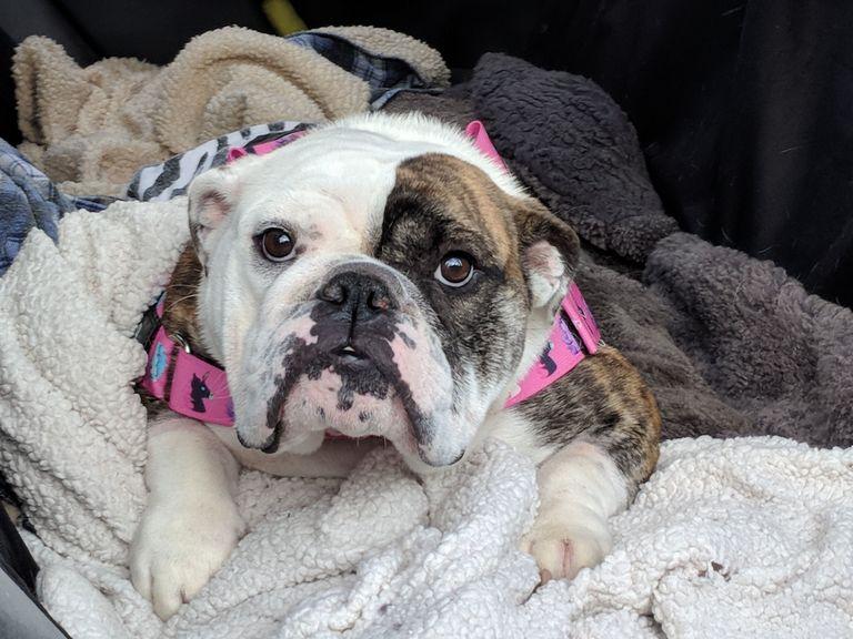 Dog Adoption Vancouver Wa
