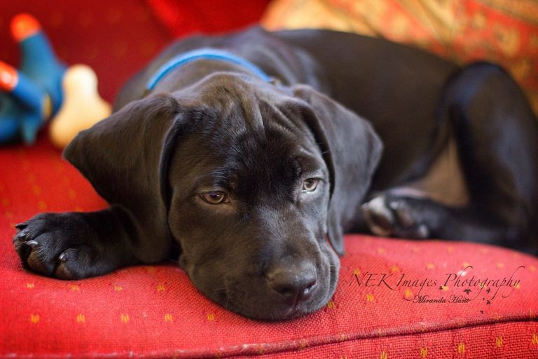 Dog Adoption Vt