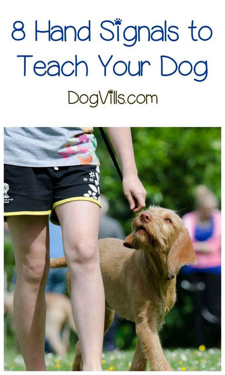 Dog Agility Hand Signals