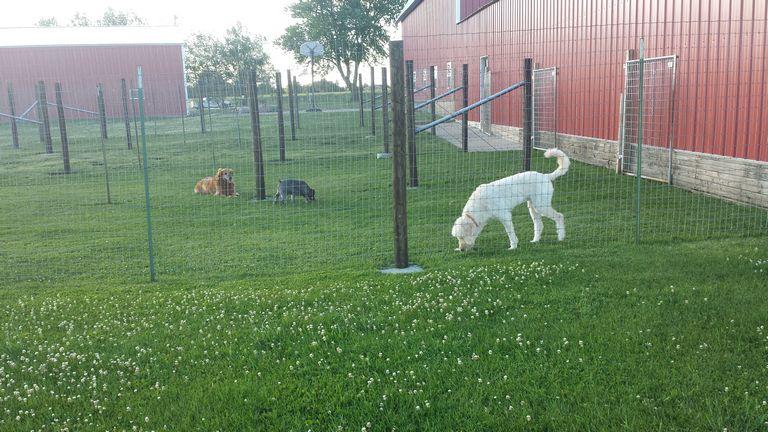 Dog Boarding Monticello Iowa
