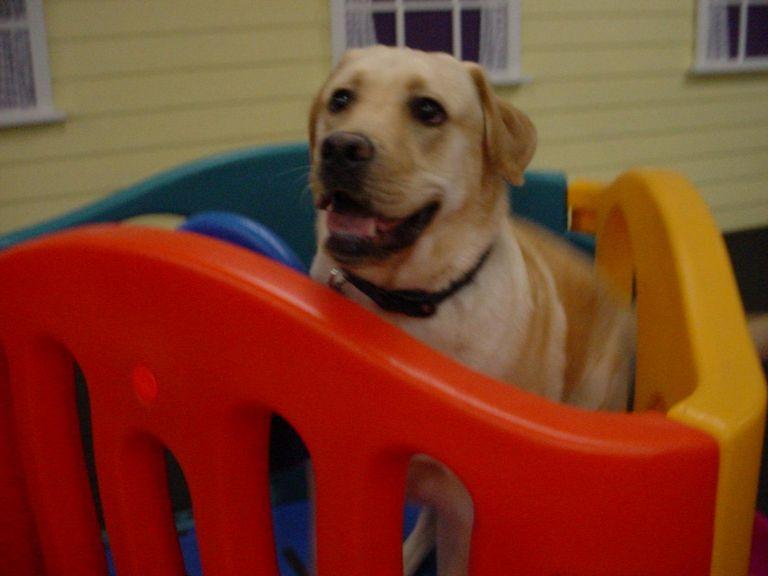 Dog Boarding North Spokane