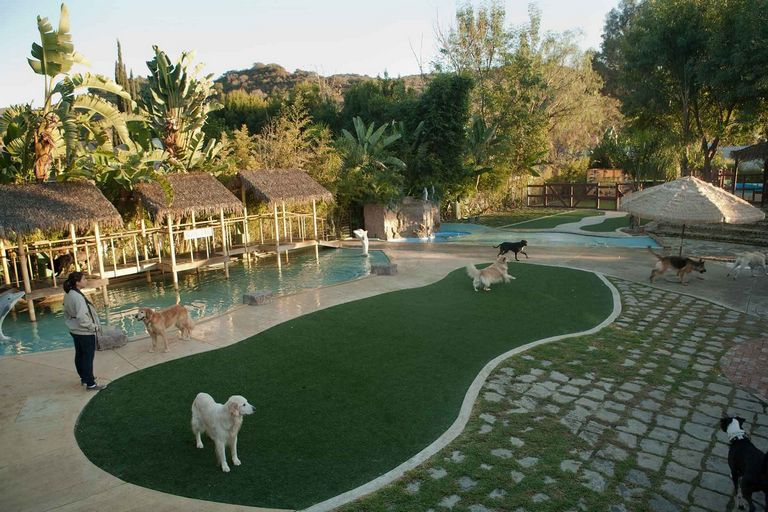 Dog Boarding Paradise Ca