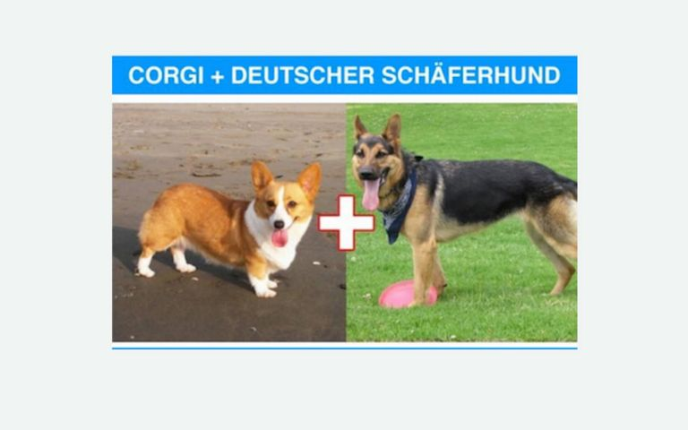 Dog Breed Mashup Generator