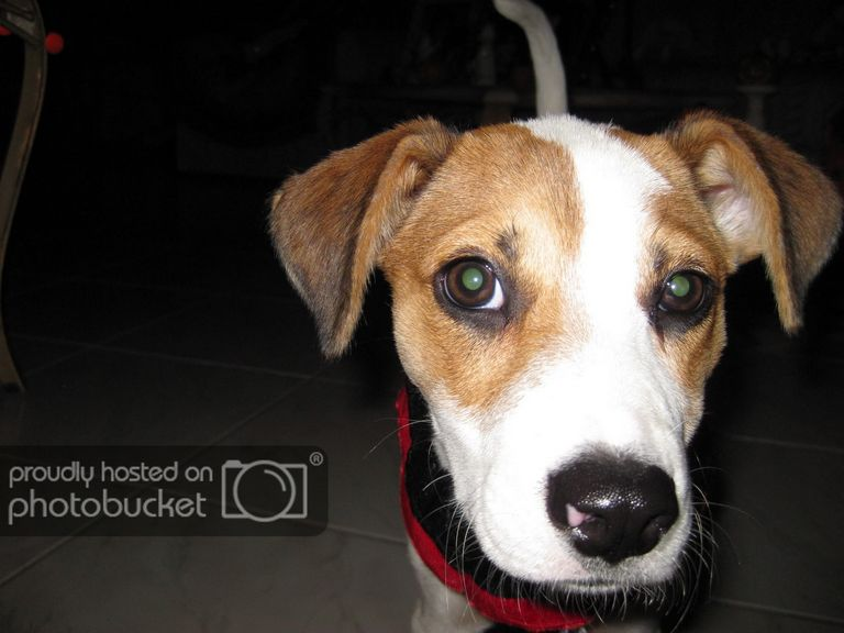 Dog Breeds With Webbed Feet List