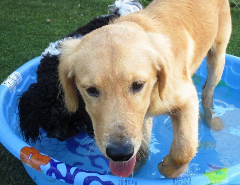 Dog Daycare Evansville In