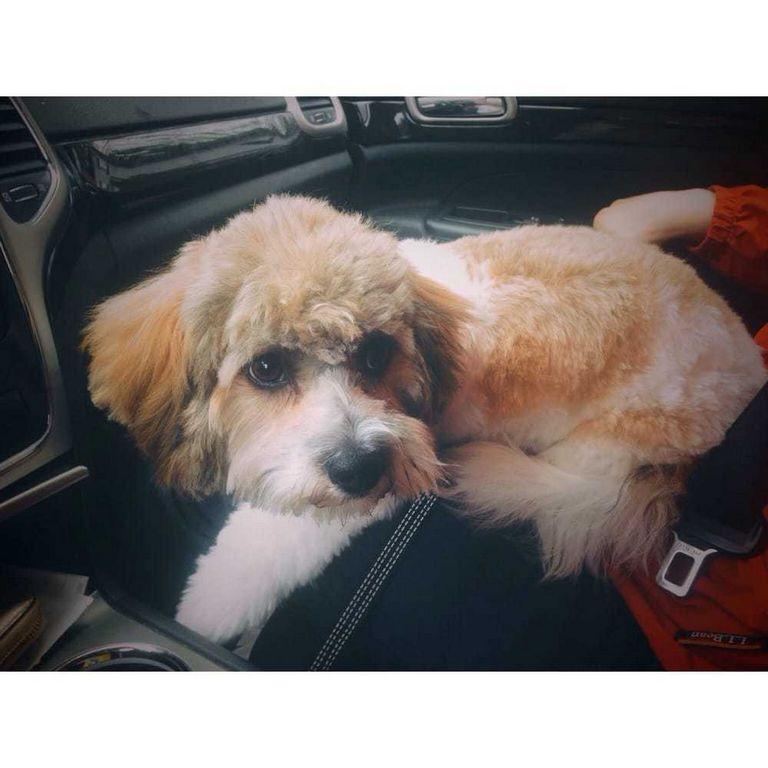 Dog Grooming Hudson
