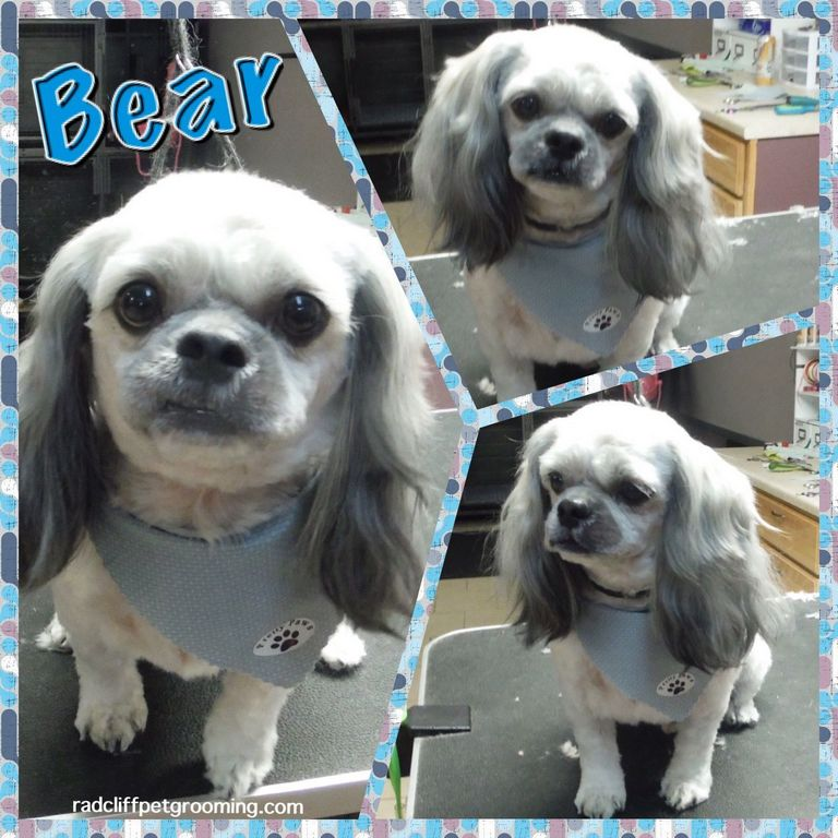 Dog Grooming Radcliff Ky