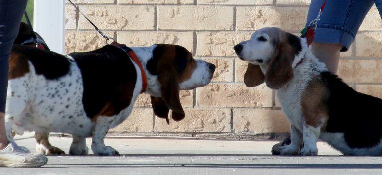 Dog Grooming Rapid City Sd
