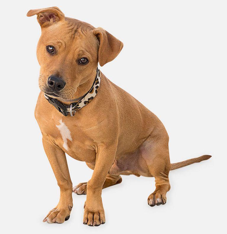 Dog License Los Angeles County