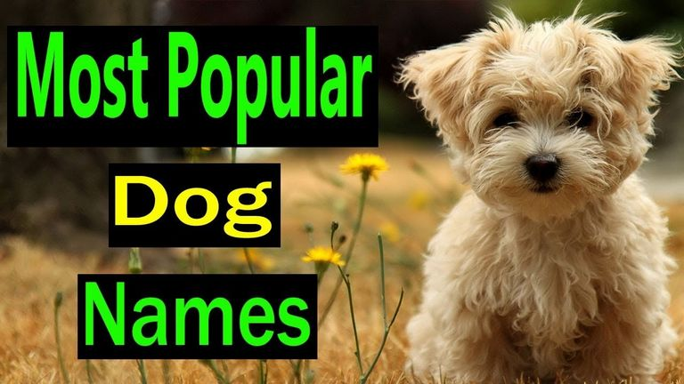 Dog Name Generator By Breed