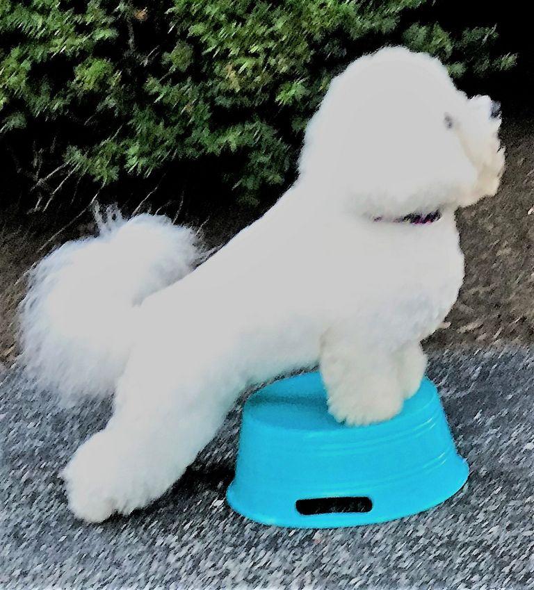 Dog Obedience Training Edmond Ok