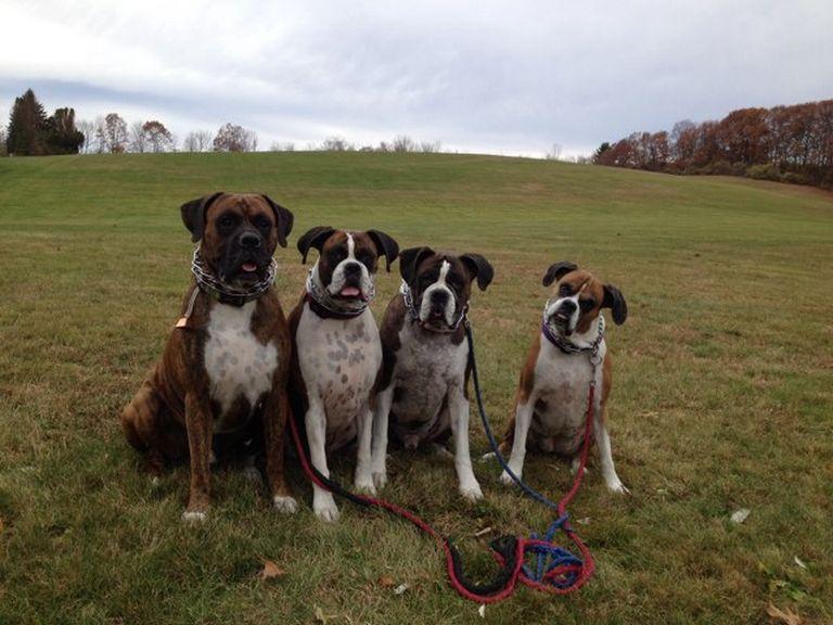 Dog Park Bedford Nh