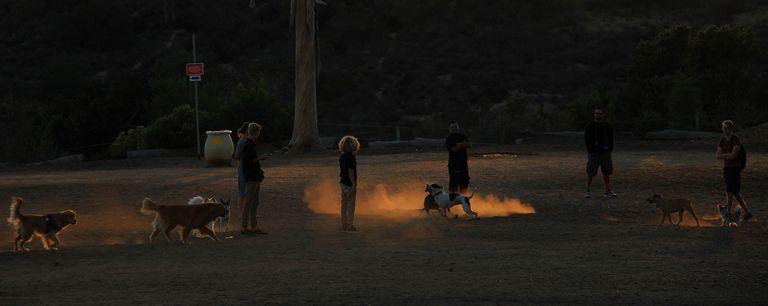 Dog Park North Park San Diego