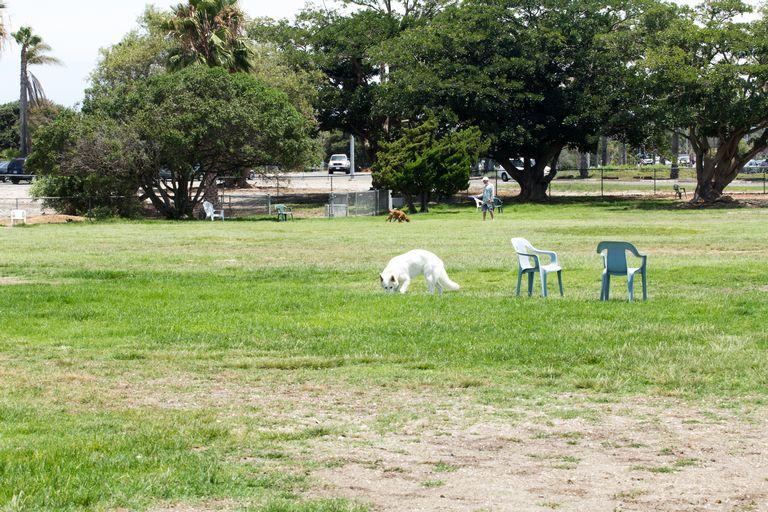 Dog Parks San Diego