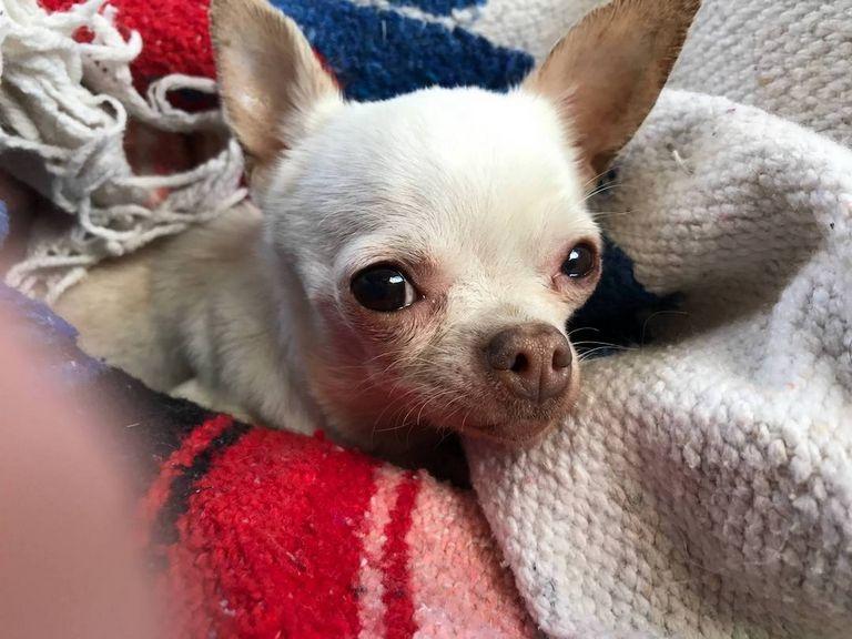 Dog Rescue Bloomington Il