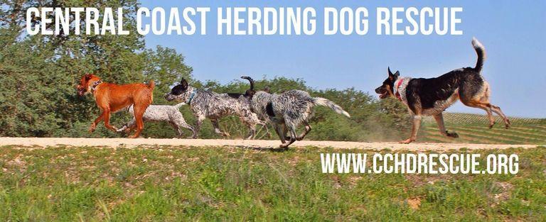 Dog Rescue Central Coast California