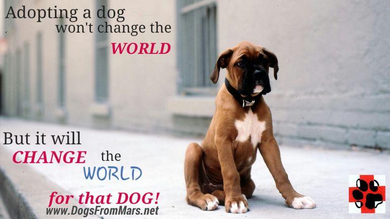 Dog Rescue Champaign Il
