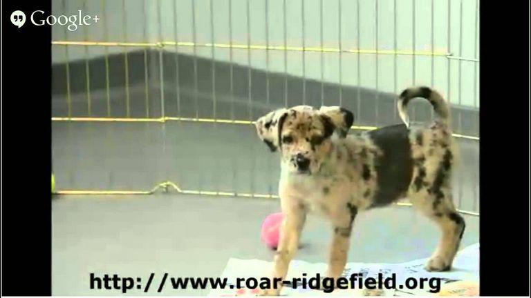 Dog Rescue Ct