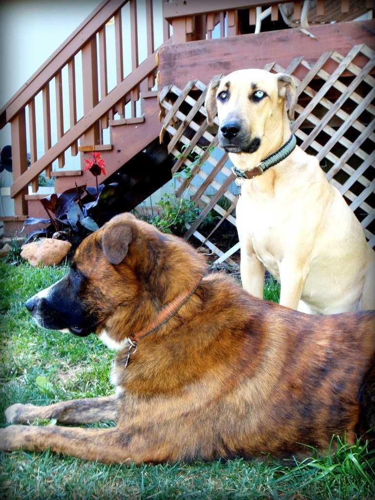 Dog Rescue Daytona