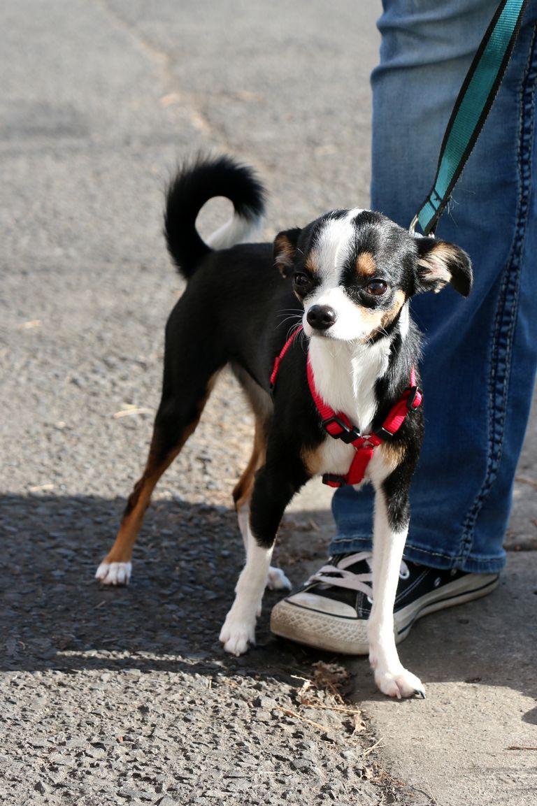 Dog Rescue North Idaho