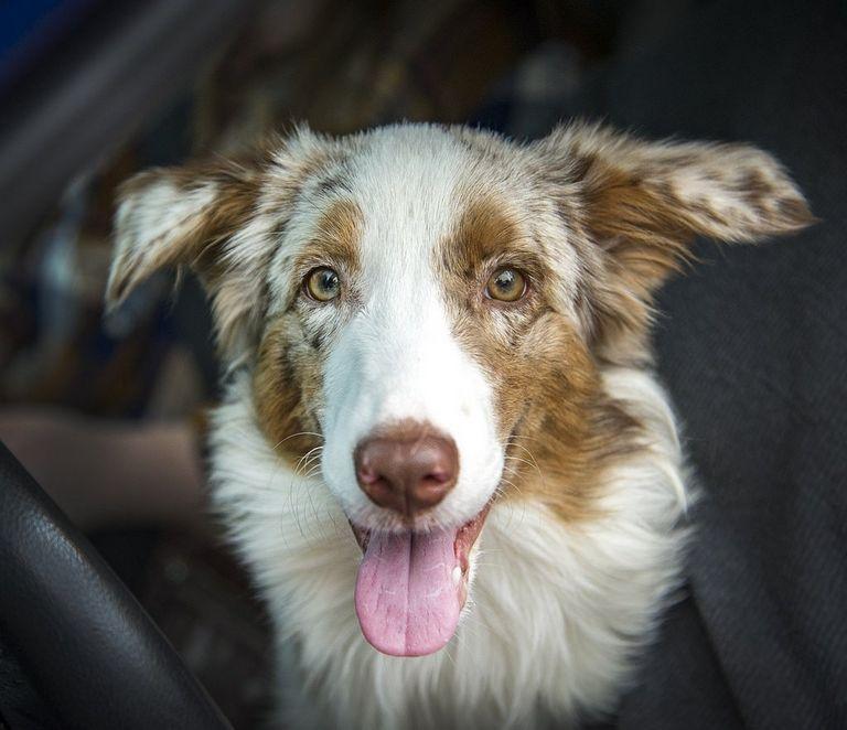 Dog Rescue Northern Colorado
