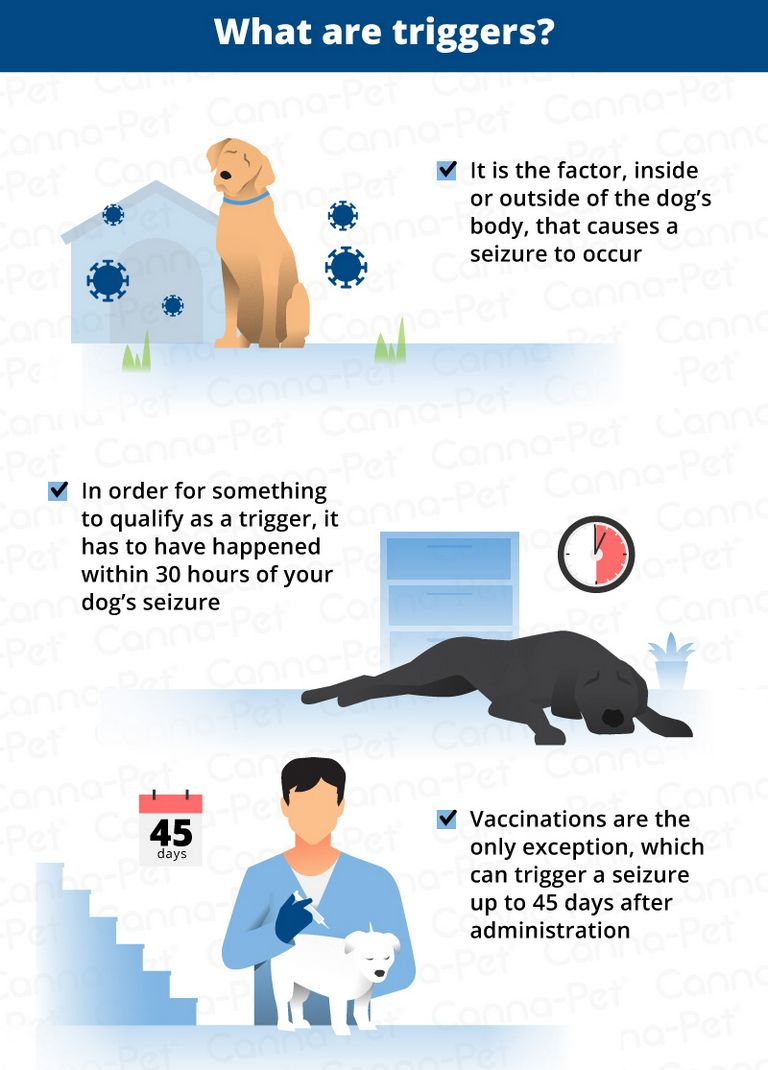 Dog Seizure Triggers