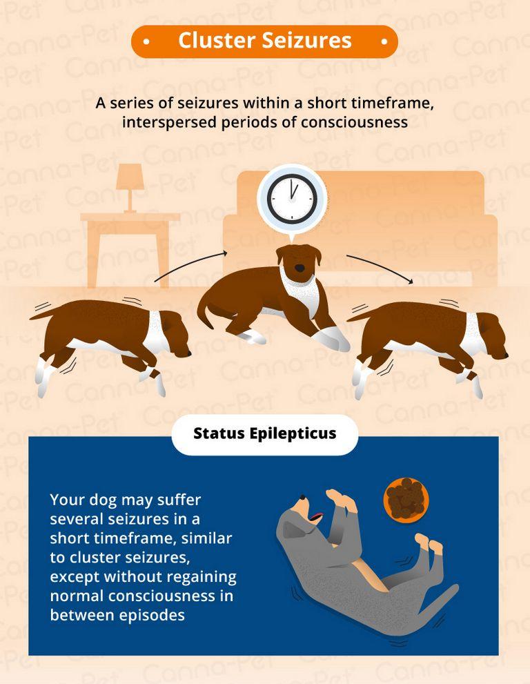 Dog Seizures Video