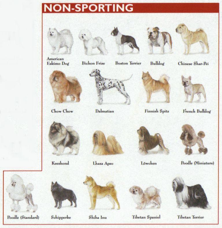Dog Show Classes Definition
