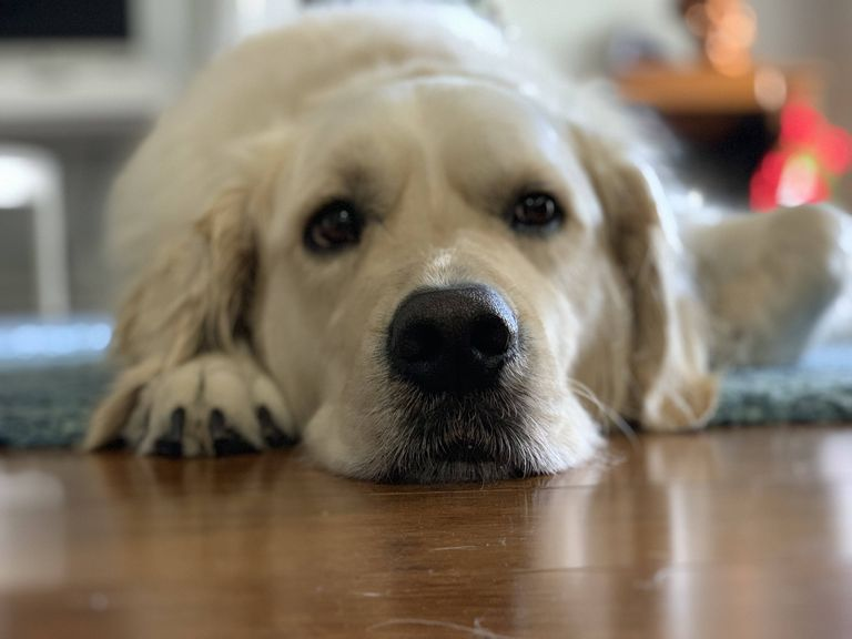 Dog Sick After Worming Tablets