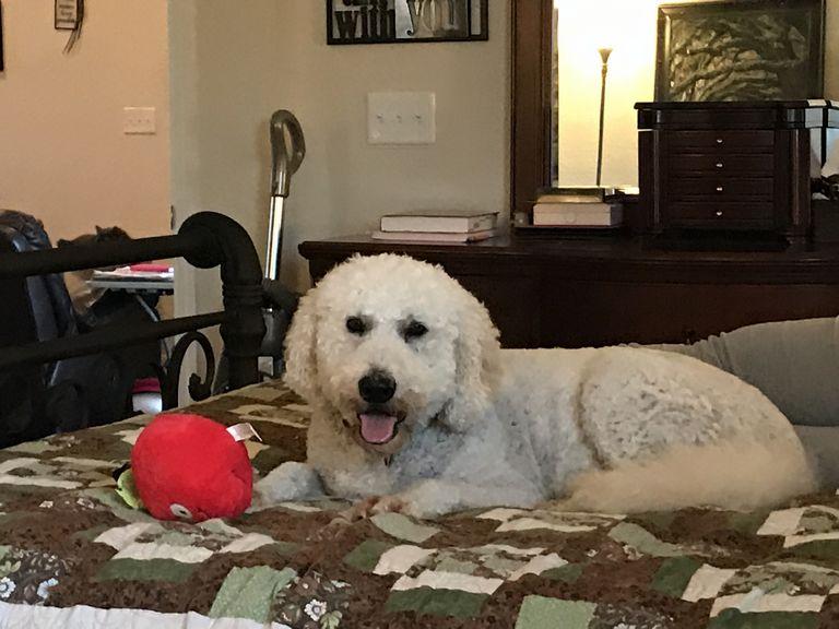 Dog Sitter Clermont Fl
